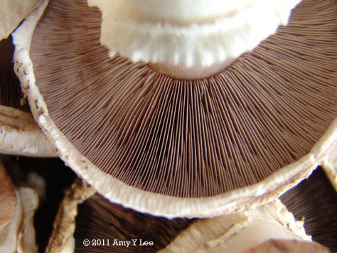 Bulich Mushroom Farm